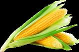 pngkit_sweet-corn-png_8710073